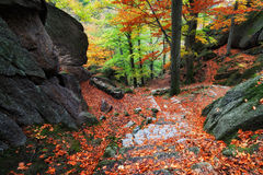 山行迹在秋天森林里 库存图片