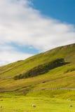 山谷国家公园约克夏 库存照片