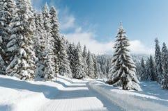 山路和积雪的杉木 免版税库存图片
