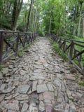 山路在夏天2 免版税库存图片