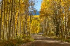 山路在金黄亚斯本树丛里 库存照片
