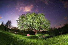 登山车在一棵开花的树下在晚上 免版税库存图片
