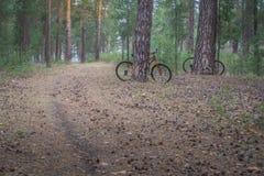 登山车在足迹的森林停放了在日出 免版税库存照片