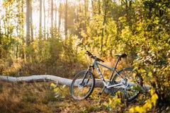 登山车自行车有限公司品牌是一棵老下落的树在秋天 免版税图库摄影