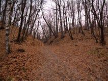 山道路穿过秋天森林 免版税库存图片
