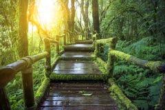 山雨林土井Inthanont国家公园池氏湿气  免版税库存图片