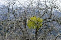 山雪与树的风景在Ilisu,加赫阿塞拜疆,大高加索的自然和雾 免版税库存照片