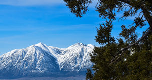 山雪在春天 库存图片