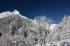 山雪森林 库存图片