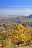 从山顶的看法金黄larchs和谷的 库存照片