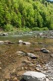 山风景、森林和快速的山河 与山河的美好的风景 库存图片