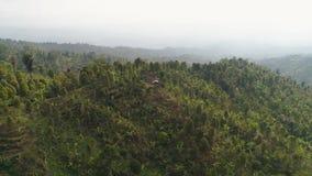 山风景农田和村庄巴厘岛,印度尼西亚 股票录像