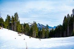 山风景在德国 库存图片