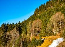 山风景在春天 图库摄影