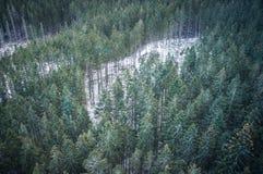 山风景的冬天森林 免版税库存图片