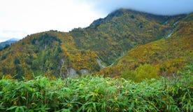 山风景秋天在日本 库存图片