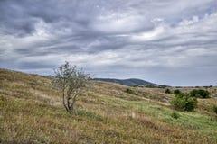 山风景,自然,在山的春天 库存照片