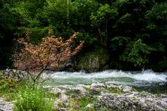 山风景 被搅动的河、树和石头 免版税库存照片