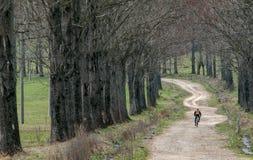 山骑自行车的人 免版税图库摄影