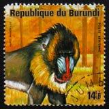 山魈属或者狒狒,系列动物布隆迪,大约1975年 免版税库存照片