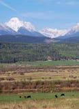 山麓小丘大农场 库存照片