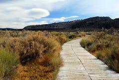 山麓小丘象草的走道 库存照片