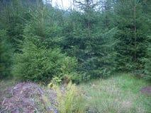山,喀尔巴汗,乌克兰,森林,绿色,树,新鲜空气 免版税库存照片