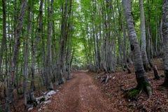 黑山,山毛榉树丛 库存图片