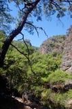 山,树Sougia, Lissos,克利特希腊 免版税库存图片