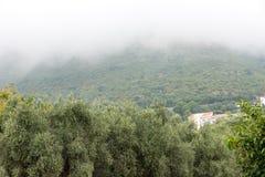 黑山:橄榄树小树林 库存照片