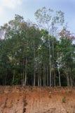 山崩在森林里 免版税图库摄影