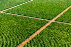 黑山绿色葡萄园-天线 免版税库存图片