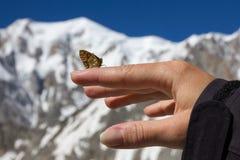 山蝴蝶在手边 库存图片