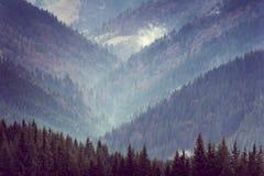 山Forest Hills风景  免版税库存照片