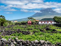 山pico的图象与房子和葡萄园的在pico亚速尔海岛上  免版税库存图片