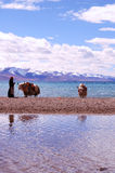 山s雪西藏 免版税库存图片