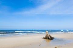 3000岁在海滩的树干在风暴以后 Slowinski国家公园,波罗的海,波兰 库存图片