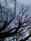崎岖的冬天树 免版税库存图片