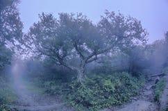 崎岖的庭院北卡罗来纳里奇大路秋天NC sceni 免版税库存照片