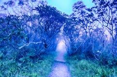 崎岖的庭院卡罗来纳州蓝岭山行车通道秋天NC sceni 免版税图库摄影