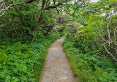 崎岖的石峰足迹北卡罗来纳 图库摄影