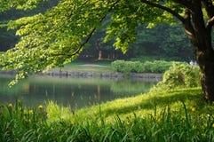 仲岛庭院早晨 库存照片