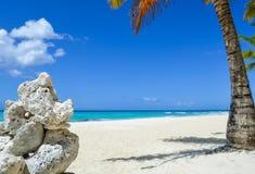 岩层和棕榈树在异乎寻常的加勒比海滩 库存照片