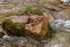 岩石în河 库存照片
