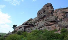 岩石伟大的鹫 库存图片