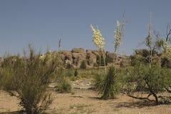 岩石和丝兰在岩石国家公园城市 免版税库存照片