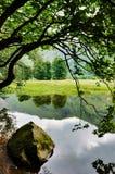 岩石和伸出的结构树Lake 免版税库存图片