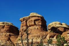 岩石和干燥结构树,犹他 免版税库存照片