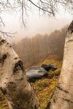 岩石和树在Val de Aran 免版税库存照片