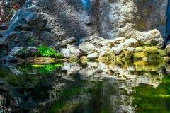 岩石和植物反射在印刷品的水中 库存图片